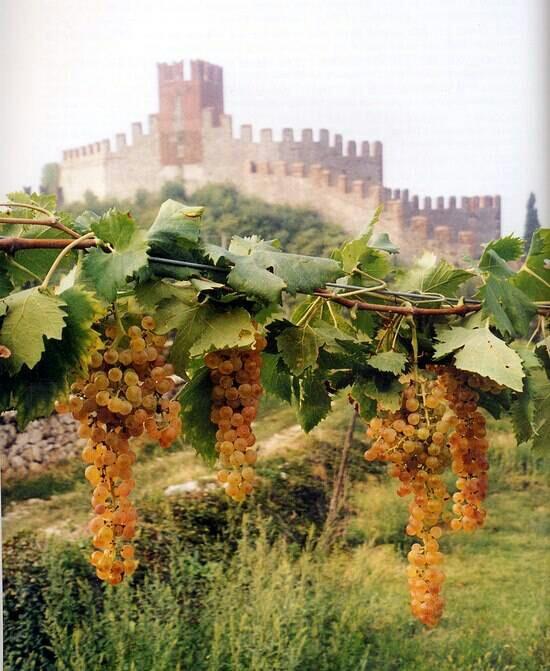 wine in italy