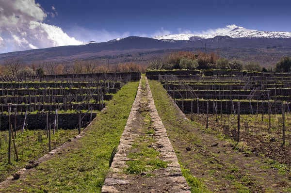 Tascante Estate on Mount Etna