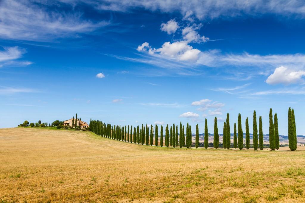 TuscanyCypressHill