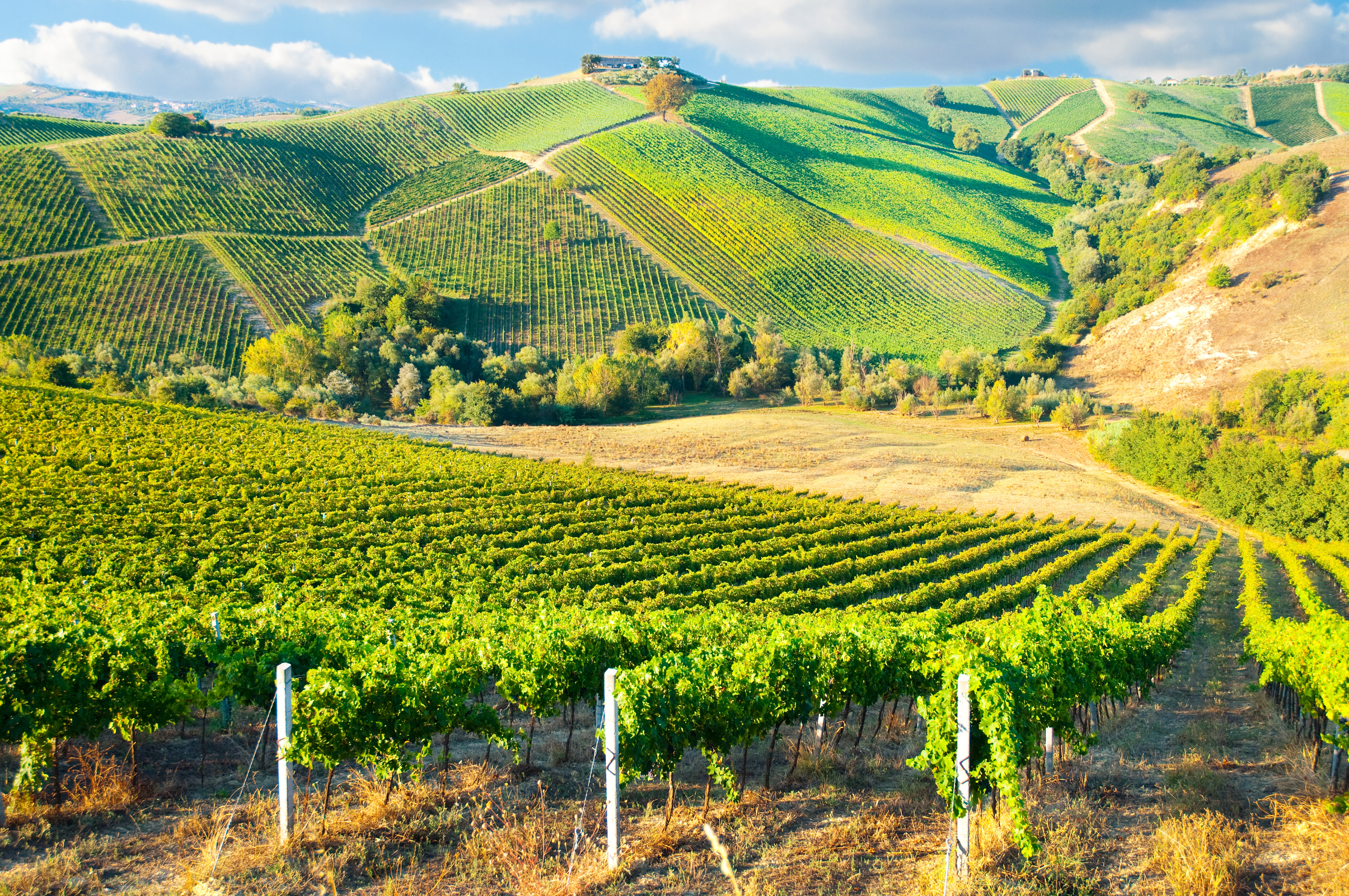 Tuscan Winery Tour From Florence