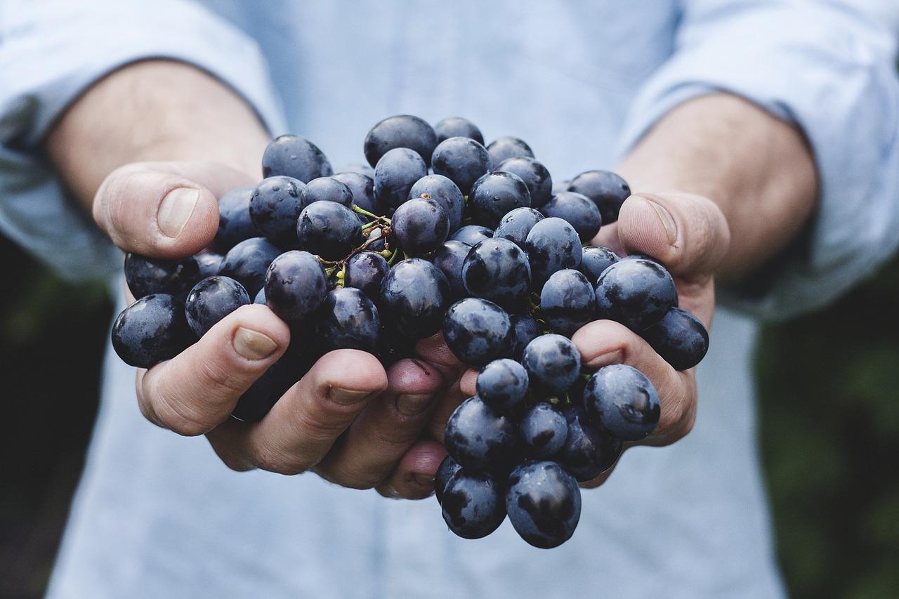 vinotheraphy