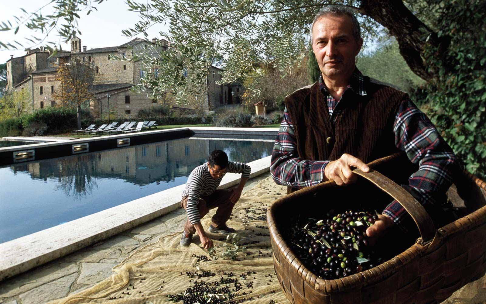 Olives harvest at Castel Monastero Tuscan Resort & Spa